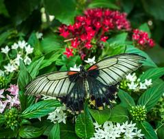 Biosphere Potsdam (Sergey Galyonkin) Tags: 2017 berlin biosphere forest garden germany green june park potsdam tropical