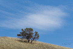 Simplicity (Angie Vogel Nature Photography) Tags: tree grassland highdesert cloud simple nature paintedhills centraloregon
