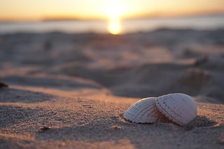 Perfect opportunity to practice macro in the Sunset on the beach in Bamburgh