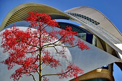 Exotic Red Tree (gerard eder) Tags: tree árbol baum exotic natur nature naturaleza architecture architektur arquitectura opera opernhaus oper ciudaddelasartesyciencias valencia city ciudades städte park parque calatrava santiagocalatrava stadtderkünsteundwissenschaften outdoor blumen flowers flores blossoms blüten red rot blue blau world travel reise viajes europa europe españa spain spanien