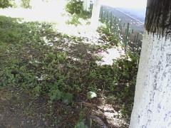 IMG13696po (chicore2011) Tags: littlepark trees shadows