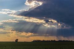 Crepuscular Rays (Larry Senalik) Tags: 2017 canon dslr illinois t3i clouds evening landscape sky