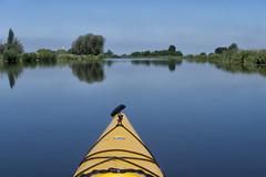 Bow (rvroel) Tags: netherlands waterscape landscape water river reflection trees kayak leidse vaart