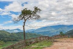 _J5K0656.0617.TL158.Sàng Ma Sáo.Bát Xát.Lào Cai. (hoanglongphoto) Tags: asia asian vietnam northvietnam northwestvietnam landscape scenery vietnamlandscape vietnamscenery vietnamscene nature tree sky cloud bluessky hdr countryside vietnamcountryside canon canoneos1dsmarkiii zeissdistagont2035ze tâybắc làocai bátxát phongcảnh nôngthôn thiênnhiên cây bầutrời bầutrờixanh mây đámmây sàngmasáo