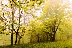 Luce (Marco Allegro) Tags: natura nebbia alberi boschi