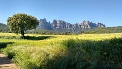 Pla del Masroig - Montserrat Nord