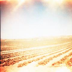 Field (motagirl2) Tags: spain holidays lomography filmphotography film ishootfilm istillshootfilm filmisnotdead xpro crossprocess mediumformat 120mm yecla murcia
