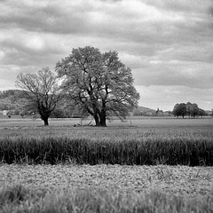 Mamiya205 (salparadise666) Tags: mamiya c330 sekor 180mm bw orange filter fomapan 100 caffenol cl semistand 32min nils volkmer vintage camera medium format 6x6 square analogue film landscape nature hannover niedersachsen germany monochrome black white tree field view