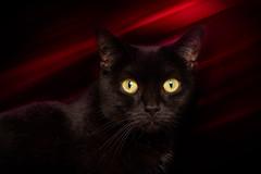 'Hazey' (Jonathan Casey) Tags: black rescue nikon d810 105mm f28 vr norfolk catchums chums jonathancaseyphotography