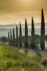 A9905776_s (AndiP66) Tags: zypressen cypresses sanquiricodorcia sanquirico dorcia siena pienza valledorcia valle toscana tuscany italien italy sony alpha sonyalpha 99markii 99ii 99m2 a99ii ilca99m2 slta99ii tamron tamronspaf70200mmf28dildif tamron70200mm 70200mm f28 amount andreaspeters