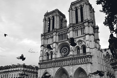 DSC_3355_2 (kiira-x) Tags: notredame paris france europe bird oiseau pigeons monochrome black white photography flying cathédrale