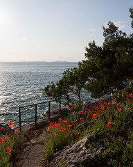 IMG_4533 - Poppies and rough adriatic sea (Tobwie) Tags: croatia kroatien poppy mohn mohnblüte adria adriatic primosten rough rauh windy windig clear sonnig day tag canon