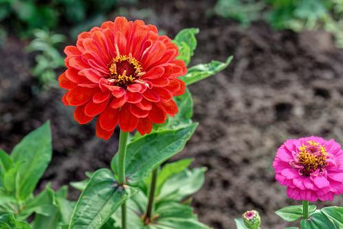 Flower 211 ©  Alexxx Malev