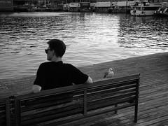 """Sunset In The Beach"" (giannipaoloziliani) Tags: minimal flickr iphone iphonephoto porto spiaggia dark streetcaptures streetphotography situations capture bench banchina quay seagull bird shape men man reflections evening sera barcellona barcelona spagna spain waterreflections water sunlight black blackandwhite biancoenero monocromatico monochrome tramonto sunset"