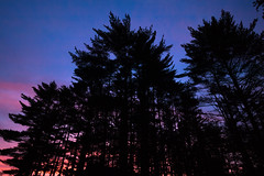 New Lens Test (Aphernai) Tags: newengland nature canon80d newlens sigma trees sunset