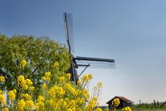 Mondrian's mill II (Mondriaan's molen)