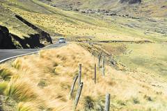 Route d'altitude..Road of height Peru (geolis06) Tags: geolis06 pérou peru 2016 amériquedusud southamerica peruano chuqlluqucha choclococha huancavelica lama andes peruvienne peruvian landscape paysage em5olympus olympusm1240mmf28