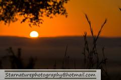 _DSC4915 copy (naturephotographywildlife) Tags: kruger wildlife scenery animals birdlife a99ii africa park