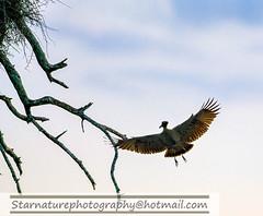 _DJA3607 copy (naturephotographywildlife) Tags: kruger wildlife scenery animals birdlife a99ii africa park