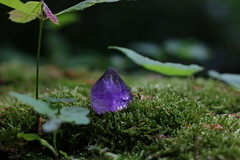 Amethyst (Sedna 90377) Tags: nature forest hike woods plants gems gemstone amethyst moss