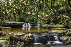 Bark Camp Creek under the Mt Laurels. (Ulrich Burkhalter) Tags: 20170521 barkcampcreek danielboonenationalforerst funstoncomplex waterfalls cascades naturalarch