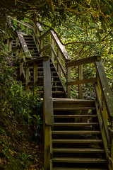 Stairs at Dingman's Falls (thomas.hartmann496) Tags: canopy elevated green hill leaf leaves natural nature overhanging photo rhododendron rhododendrons stair staircase stairs steep tree trees tunnel up walkway