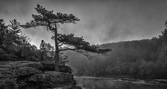 Lonely Pine (Paul Domsten) Tags: tree river forest landscape pentax stcroixriver blackandwhite black white montone rocks hiking park interstatestatepark taylorsfalls potholes lavaflow fog mist minnesota sunrise