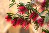 Disfrutando del color (allabar8769) Tags: flores girona lanzarote monells