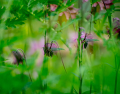 Low morning Light. (Omygodtom) Tags: doubleexposed green garden plant 7dwf nikon70300mmvrlens outdoors outside natural nature existinglight explorer soft scene scenic science nikkor nikon digital differant d7100 bokeh bright exposure air colorful leica