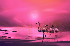 PINK PARADISE. (Viktor Manuel 990.) Tags: pink paradise paraíso rosa nature naturaleza flamingos digitalart artedigital sky cielo querétaro méxico victormanuelgómezg surrealism