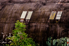 Corrugated Hut (BigRedTroll) Tags: abandoned architecture building corrosion corrugated corrugatediron decay decayed decaying england graffiti hut northampton northamptonshire northants old pattern rust shed structure texture threecounties windows