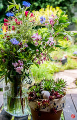 Gartenschnitt (bornschein) Tags: flower germany green garden blue spring home