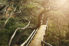Infected (Swebbatron) Tags: australia 2008 greatoceanroad bellsbeach bridge victoria fuji radlab lifeofswebb travel trees torquay