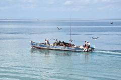 Kidume Must Have Made a Haul (The Spirit of the World) Tags: boat fishingboat ocean bay indianocean sea seaview seascape waves birds seagulls gulls fowl zanzibar eastafrica africa island