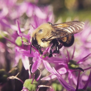 The hum off the bees is the voice of the garden