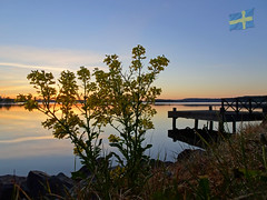 Happy Flag Day Sweden!!! ...(03:43 this morning!) (crush777roxx) Tags: crush777roxx crush 20170606 2017 june compact camera sony hx90v sweden flag day national sverige sveriges nationaldag djurgården flowers pier water reflections sunrise glow sverigesnationaldag swedennationalday swedenflagday stockholmsweden compactcamera sonyhx90v 6th
