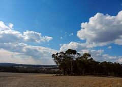 Simple lines (LeelooDallas) Tags: western australia bannister landscape tree farm eucalyptus field bush sky cloud dana iwachow nikon s9200