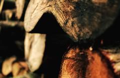 Log Stack in Delamere Forest, UK (Mr_AJonesy) Tags: pine cedar woodsmellsgood smells stroll woodland forest outdoors walk logstack logs timber wood delamereforest delamere