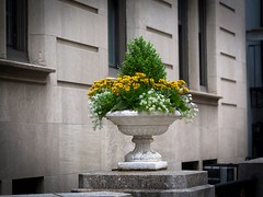 On a Pedestal (Mildred Alpern) Tags: outdoors flowers pedestal building urn planter cement granite bush
