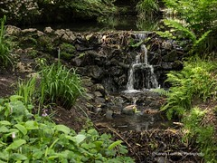 Clyne Gardens 2017 06 01 #7 (Gareth Lovering Photography 3,000,594 views.) Tags: clyne clyneinbloom botanical gardens flowers macro swansea olympus omdem10ii 30mm 30mmmacro garethloveringphotography
