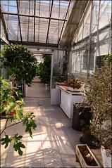 DSC_8858 (facebook.com/DorotaOstrowskaFoto) Tags: ogródbotaniczny kwiaty powsin warszawa