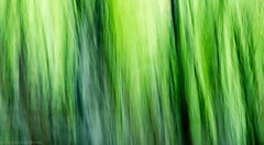 Smooth (katrin glaesmann) Tags: verzascatal verzascavalley valleverzasca tessin cantonofticino workshop filter forest beechtrees trees wood lavertezzo playtime playingaround intentionalcameramovement icm