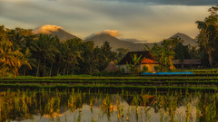 sleep walking in Bali (photocentrictravels) Tags: bali indonesia seasia agriculture clouds dawn landscape light mountains reflection ricefield ricepaddy rural sunrise travel volcanos water