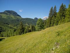 P6110152 (turbok) Tags: almlandschaft berge bärnfeichtnmölbing landschaft totesgebirge weide wörschachwald c kurt krimberger