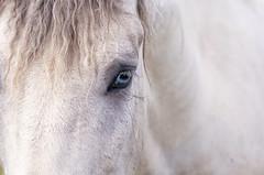 Catch Your Heart (karenhunnicutt) Tags: wildhorses equine windcave southdakota karenhunnicuttphotographycomfineartphotographer
