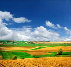 Colors of spring (Katarina 2353) Tags: serbia vojvodina katarina2353 katarinastefanovic
