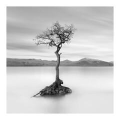 From little Acorns.... (richieJ 11) Tags: milarrochybay lochlomond scotland lonetree oak mountains mono blackandwhite longexposure