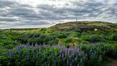 From Iceland. (Tóta. 27.12.1964.) Tags: landscape nature iceland ísland