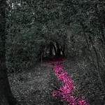Pink POP! thumbnail