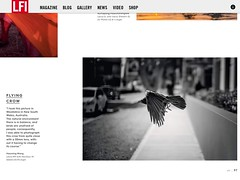 LFI 04/2017 (h.m.lenstalk) Tags: lfi leica noctilux f095 095 m9 bird flying fly